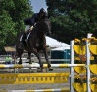 horsephoto2